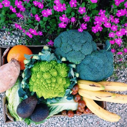 verduras- simplesano.com